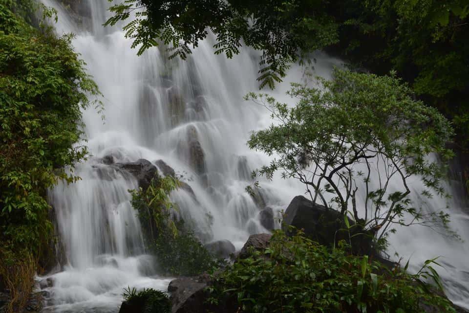 Vườn thực vật ở Phong Nha Kẻ Bàng – Quảng Bình