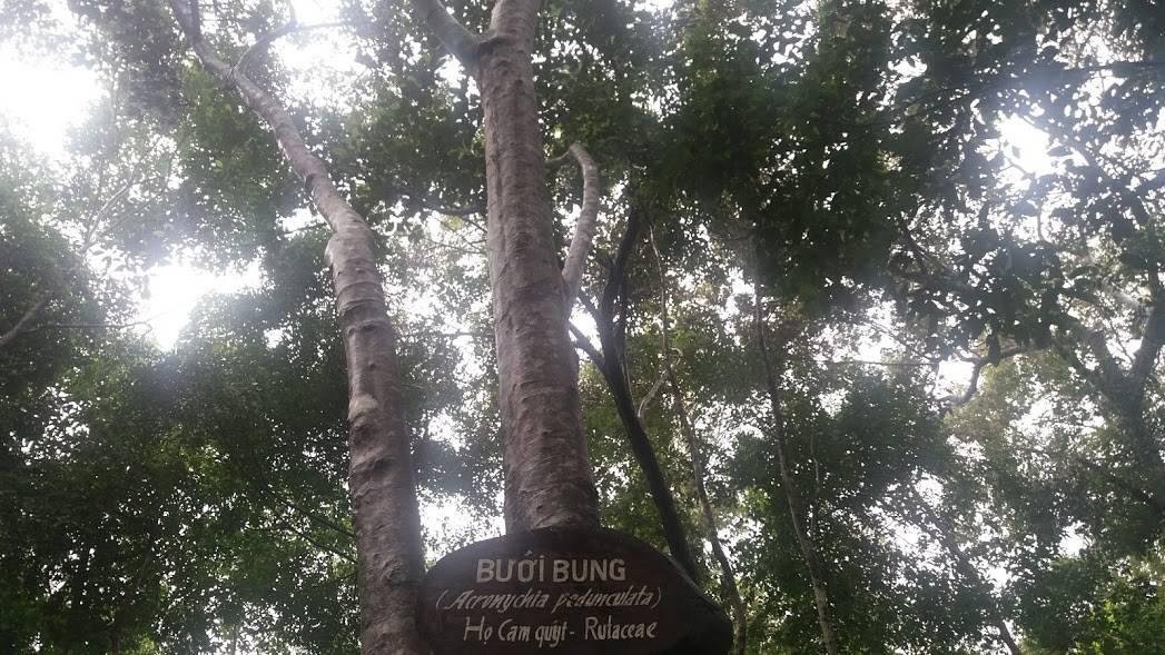 cây bưởi trong vườn thực vật - Phongnhadiscovery.com