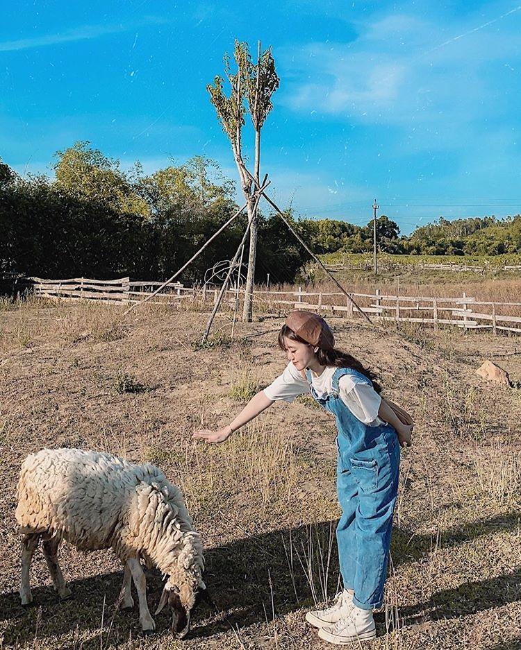 dong soi farm